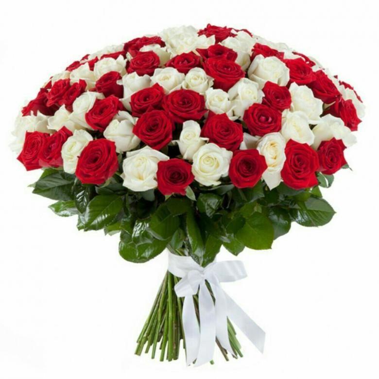 51 бело-красных роз