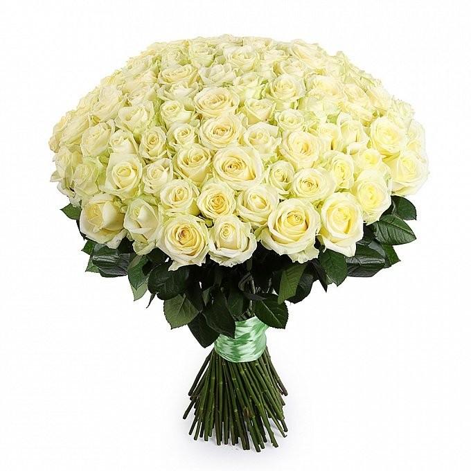 101 Trandafiri albi