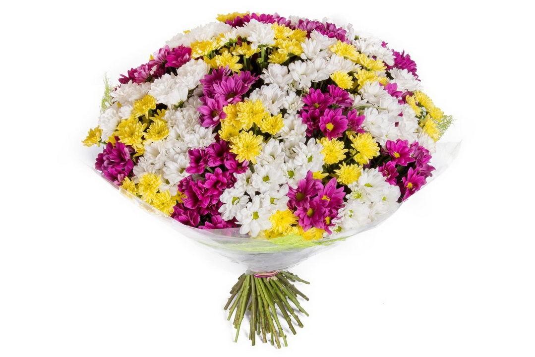 Mix crizanteme colorate