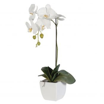 White orchid 1 branch