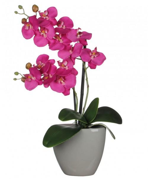 orhideie-violet-2-crengute