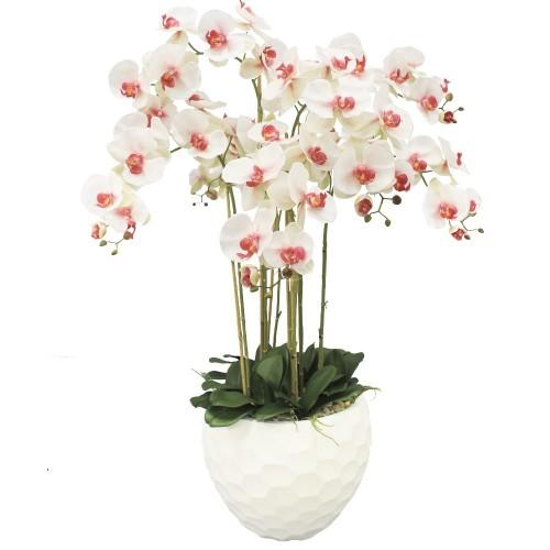 orhideie-molie-3-crengute
