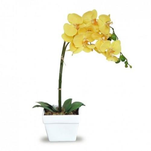 orhideie-galbena-1-crenguta