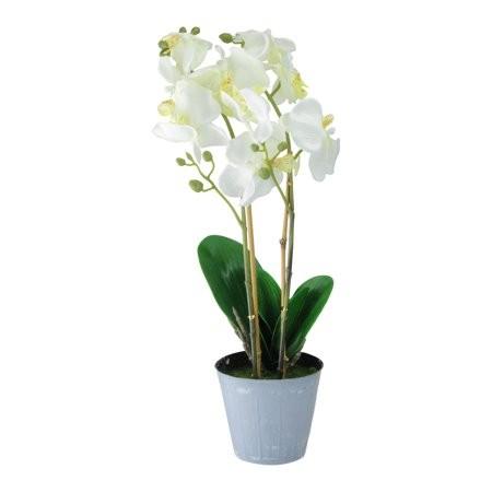 orhideie-alba-2-crengute