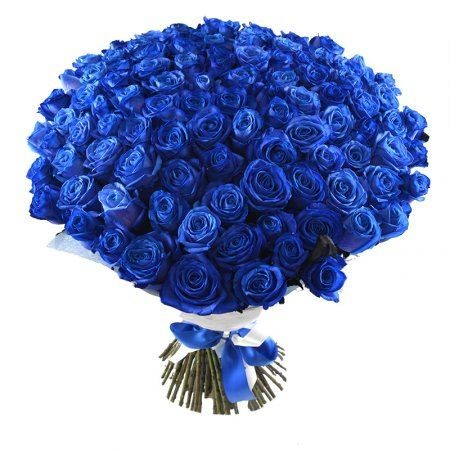 101-blue-roses