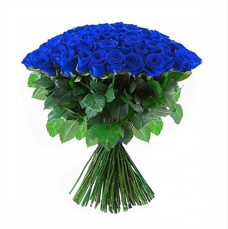 101 Trandafiri Albastri